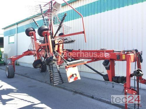Lely Hibiscus 655
