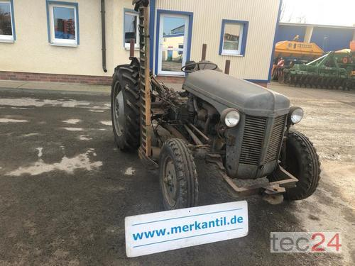 Massey Ferguson Te-F Year of Build 1956 Pragsdorf